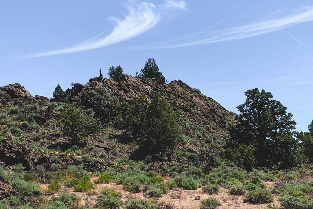 Badlands rock in surrounding bushes.