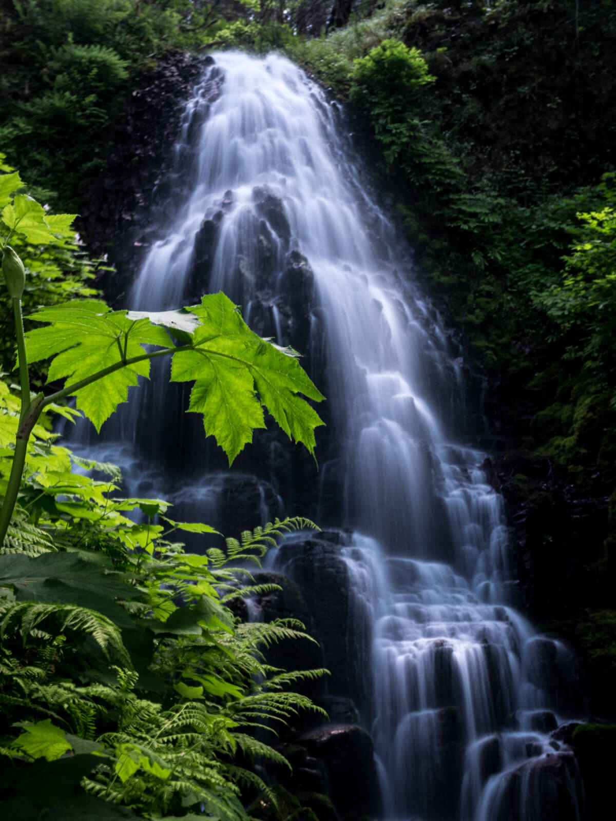 Fairy Falls with green leafs