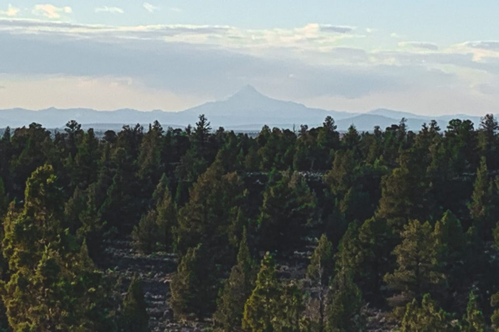 Mountain in the distance with dense forest throughout.