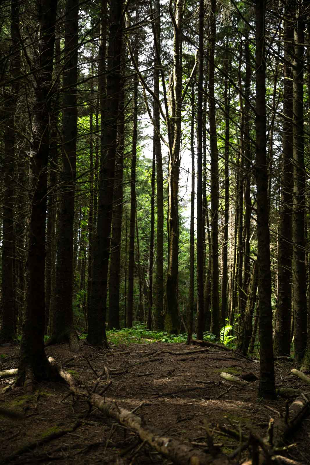 Hiking and camping on the Oregon Coast - forest views