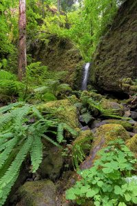 Visitting Clover Falls is a great thing to do in Umpqua National Forest