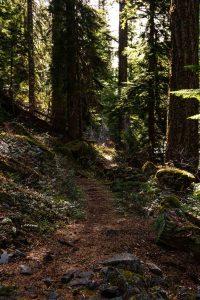 Wood path of Lemolo Falls in Umpqua National Forest