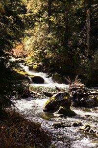The white water of Lemolo Falls in Umpqua National Forest