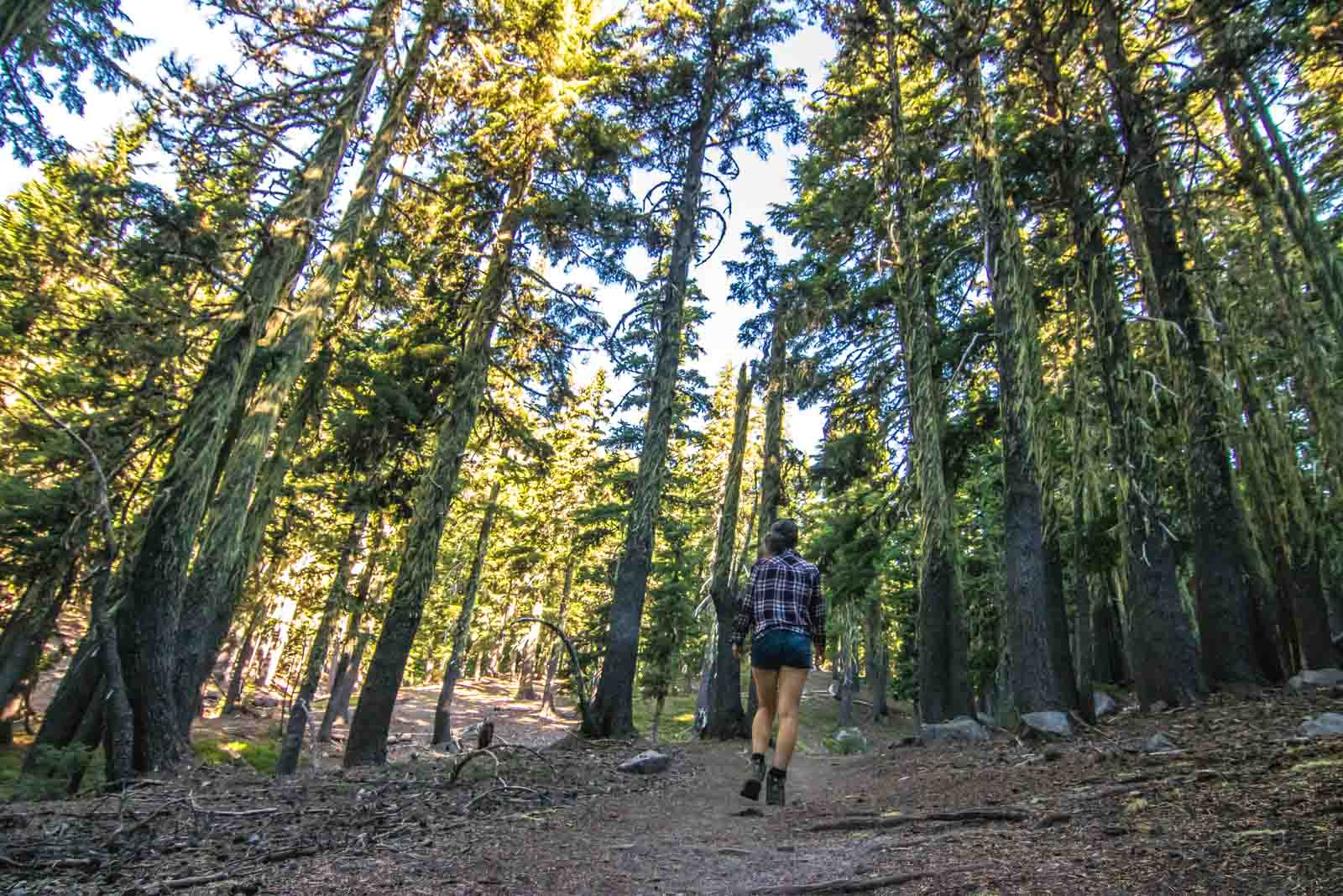 37 of the Best Hikes in Oregon