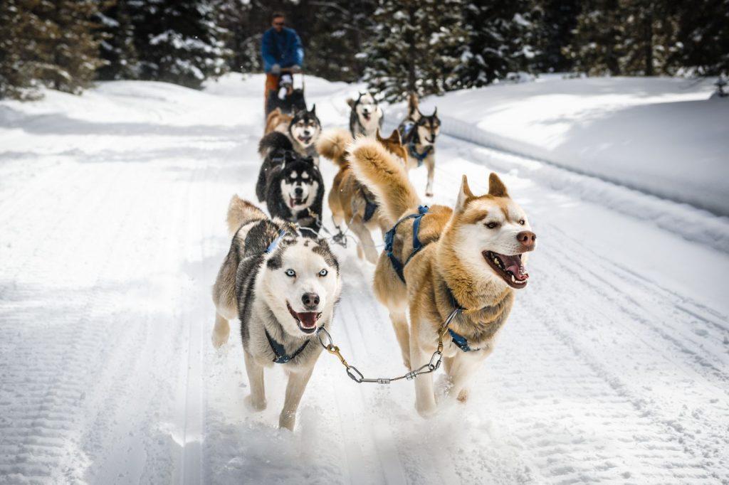 Dog sledding in winter in Oregon