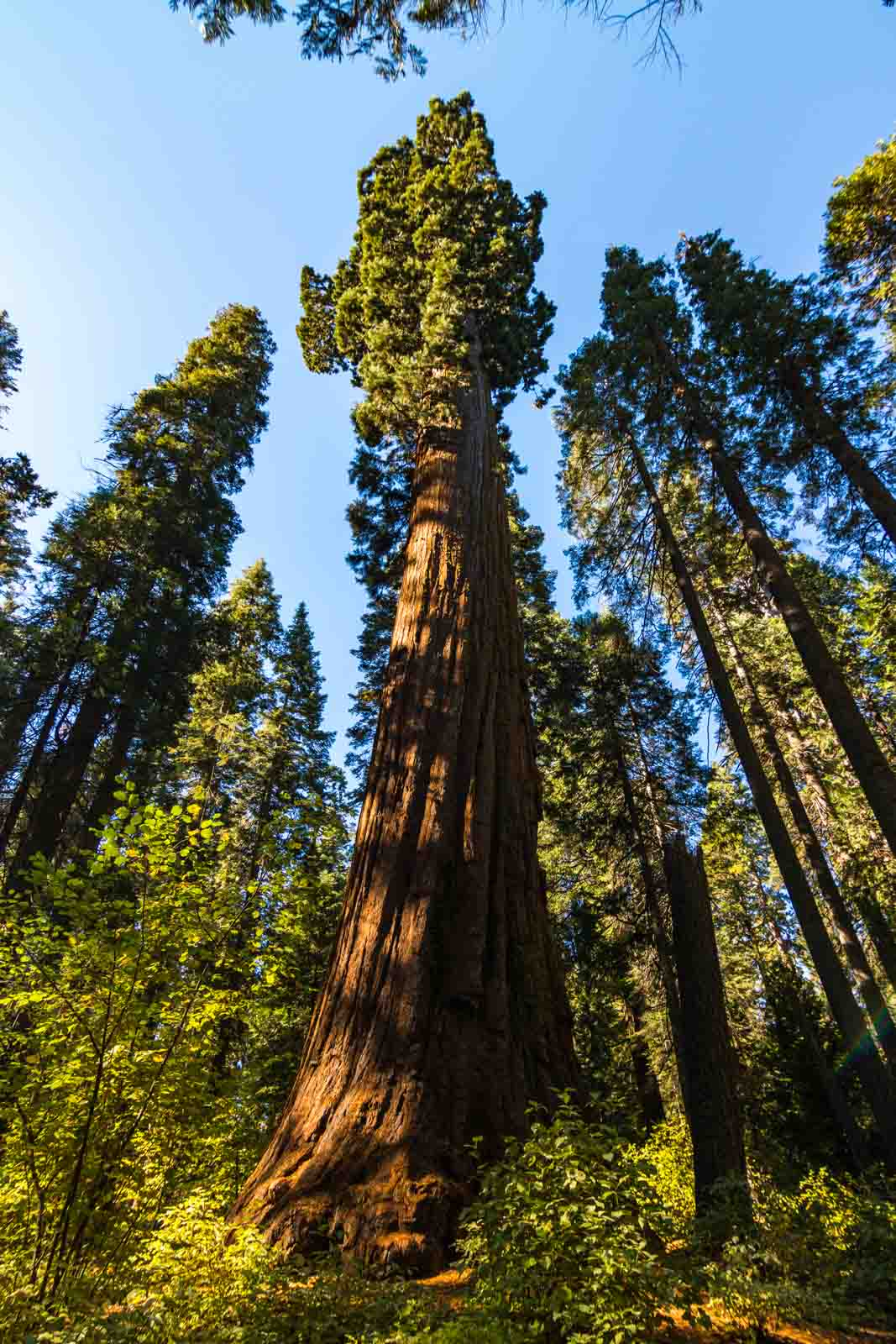 You can't miss the big trees on your Northern California road trip