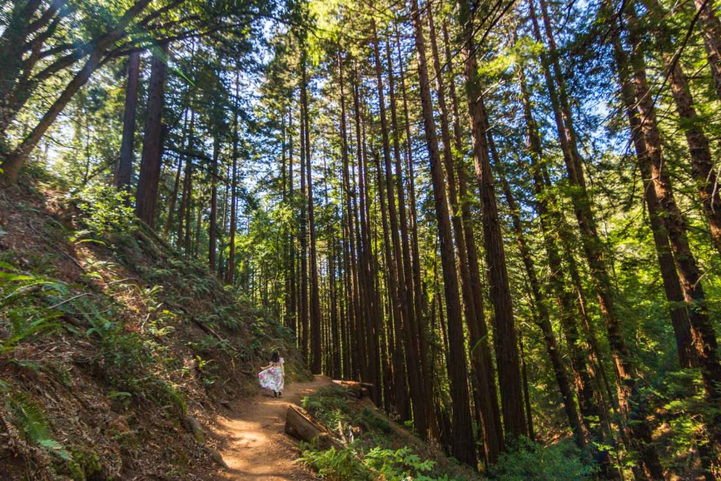 Muir Woods are a great place to visit in Northern California