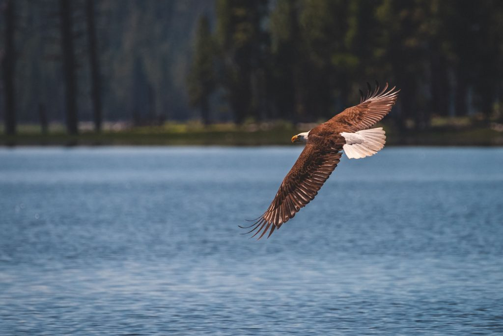 If you're lucky, you might spot a bald eagle in Summer Lake, Oregon.