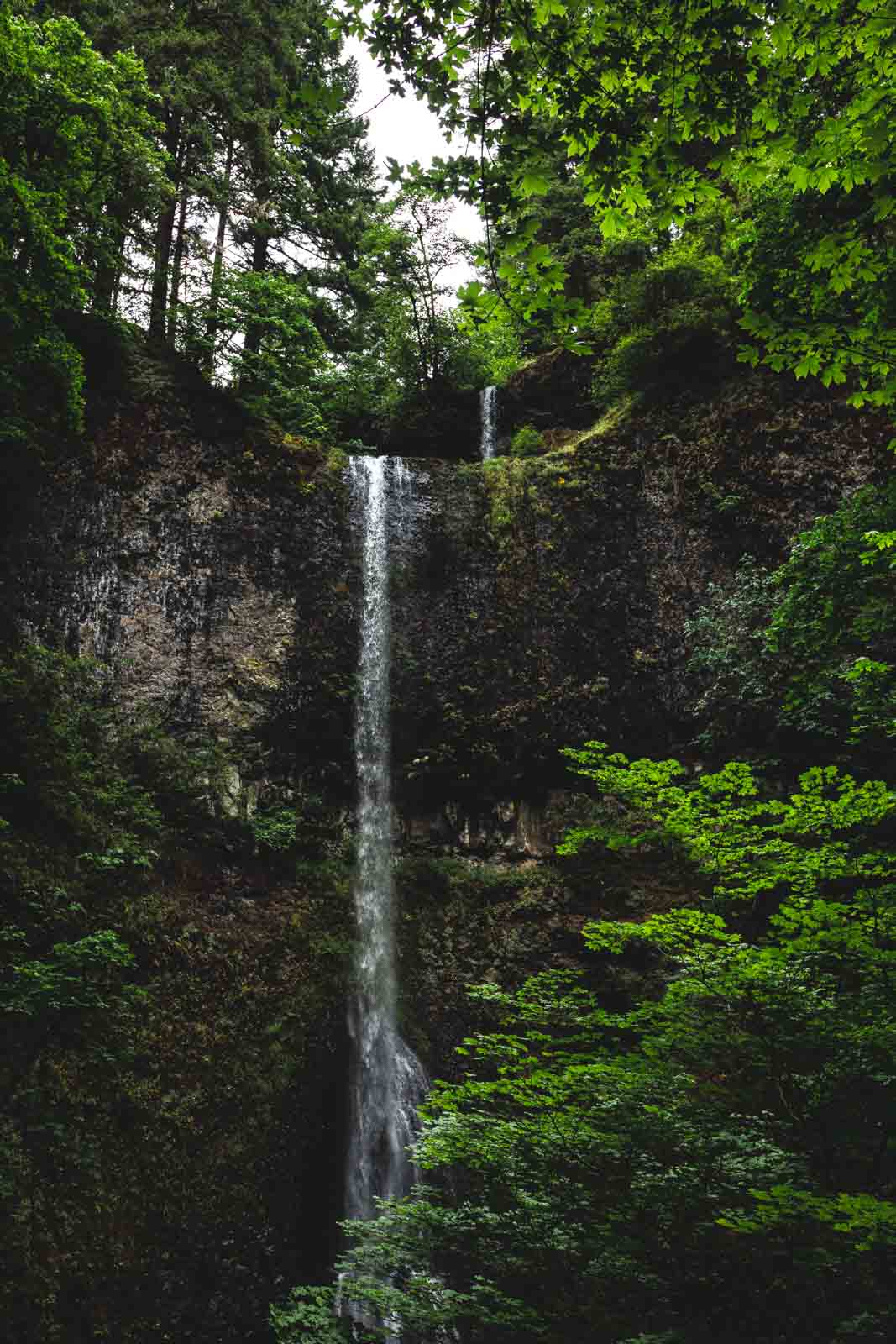 Double Falls is the tallest waterfall in Silver Falls State Park.