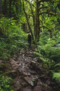 Pay attention to the Abiqua Falls trail and where you're walking because you could seriously get hurt!