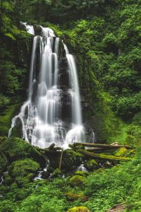 Kentucky Falls is an Oregon waterfall hike that will reward you with some pretty views.