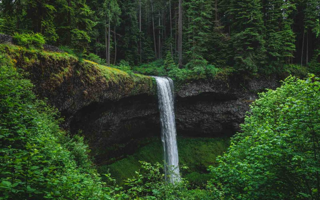 Your Guide to Silver Falls State Park—The Trail of 10 Falls & More