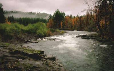 7 Tillamook State Forest Hikes to Tackle