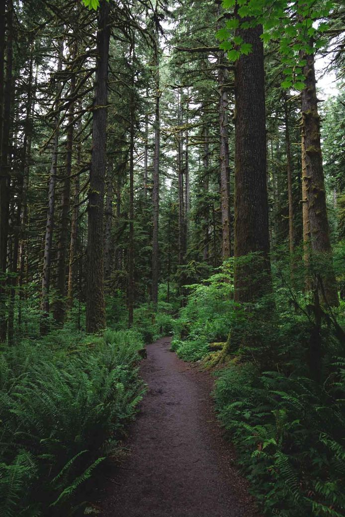 There are so many beautiful trails that lead you Oregon waterfall hikes.
