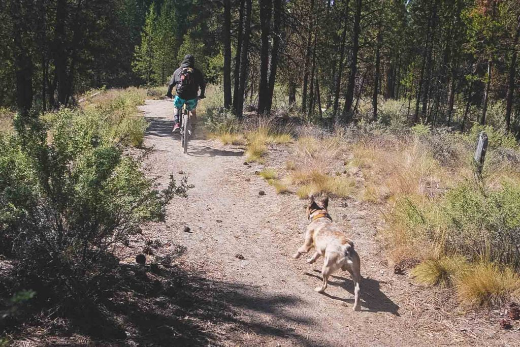 LaPine State Park offers many incredible biking trails.