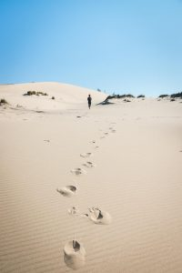 The John Dellenback Trail is a challenging and fun trail in the Oregon sand dunes.