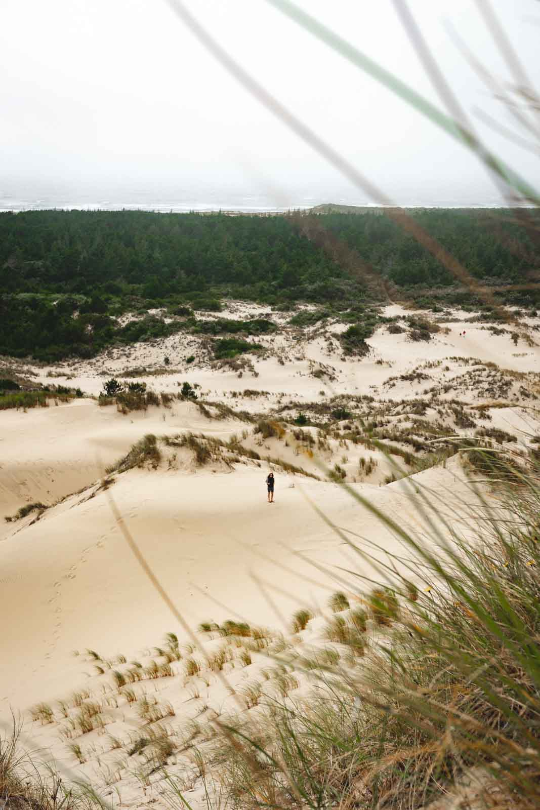 The Oregon Dunes NRA trail is a fun hike when visiting the Oregon sand dunes.