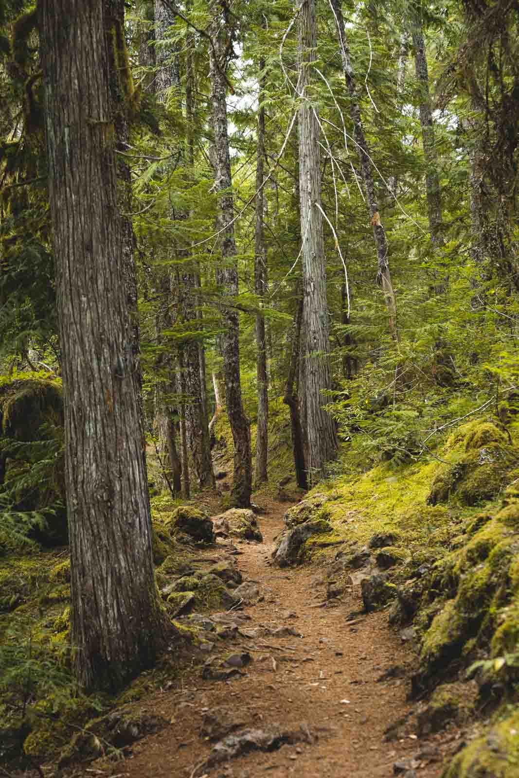 Trail in the woods leading to Koosah Falls