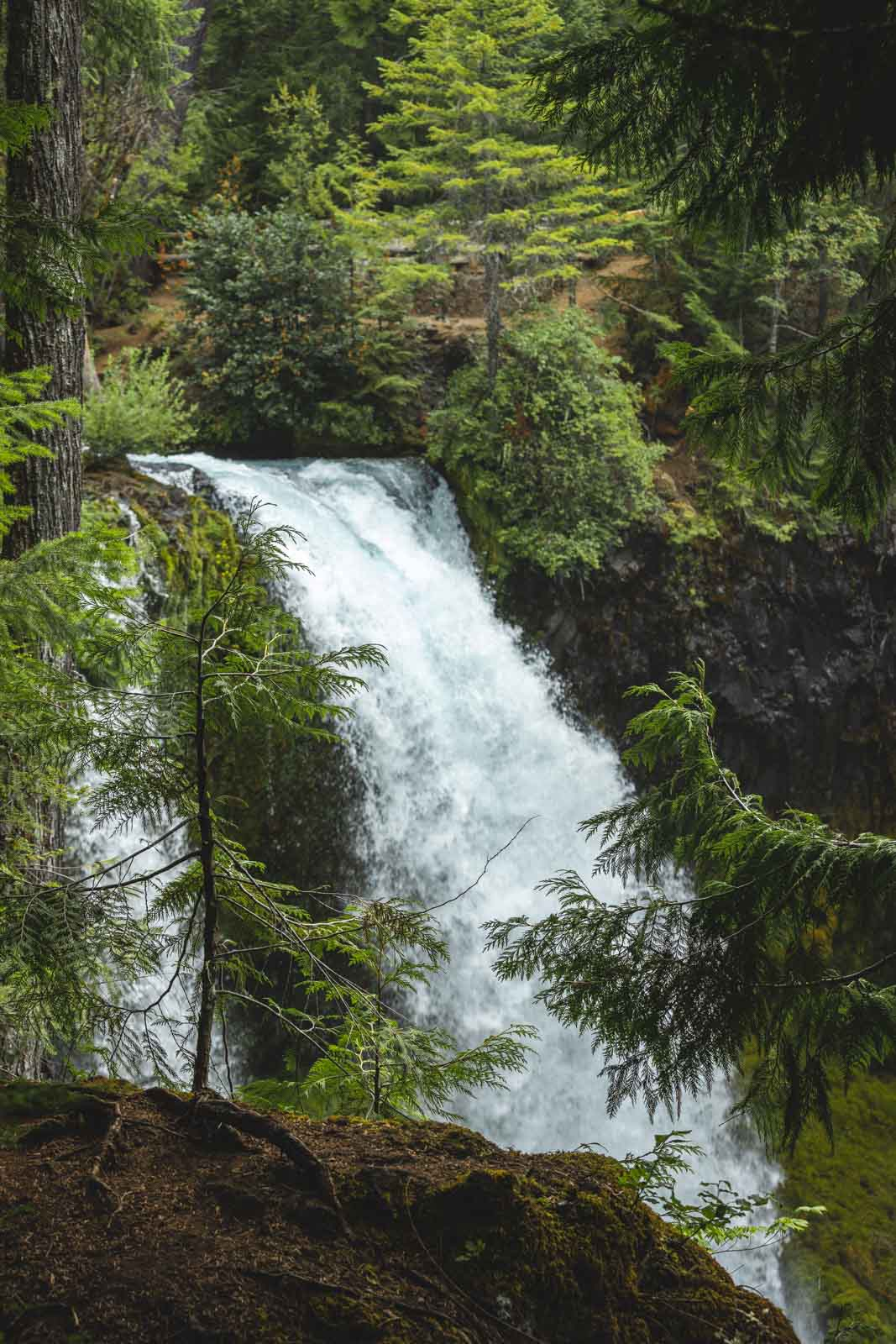View over Koosah Falls from the top