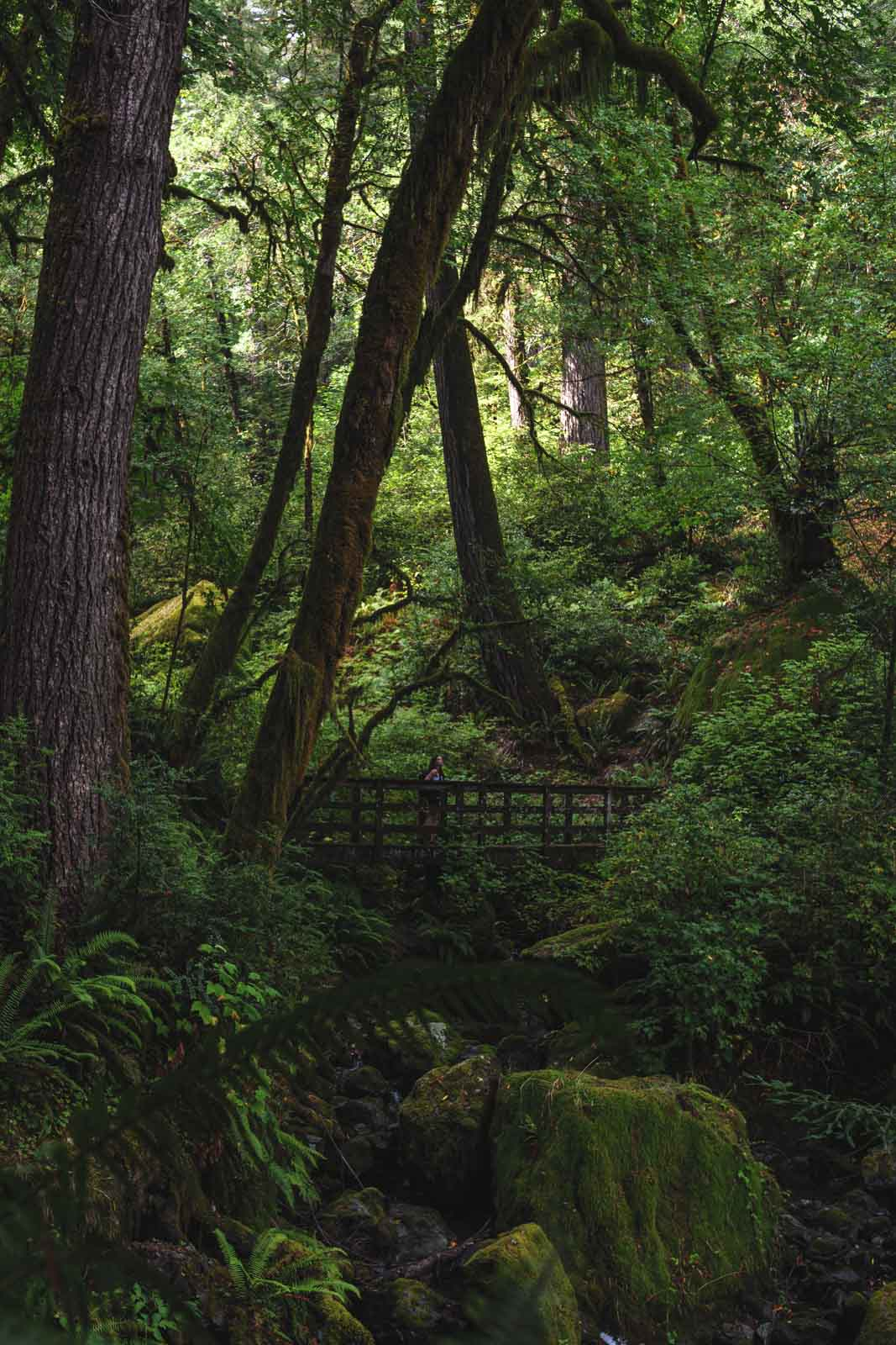 Hiking trail in the forest at Alfred A. Loeb - Oregon Coast State Parks