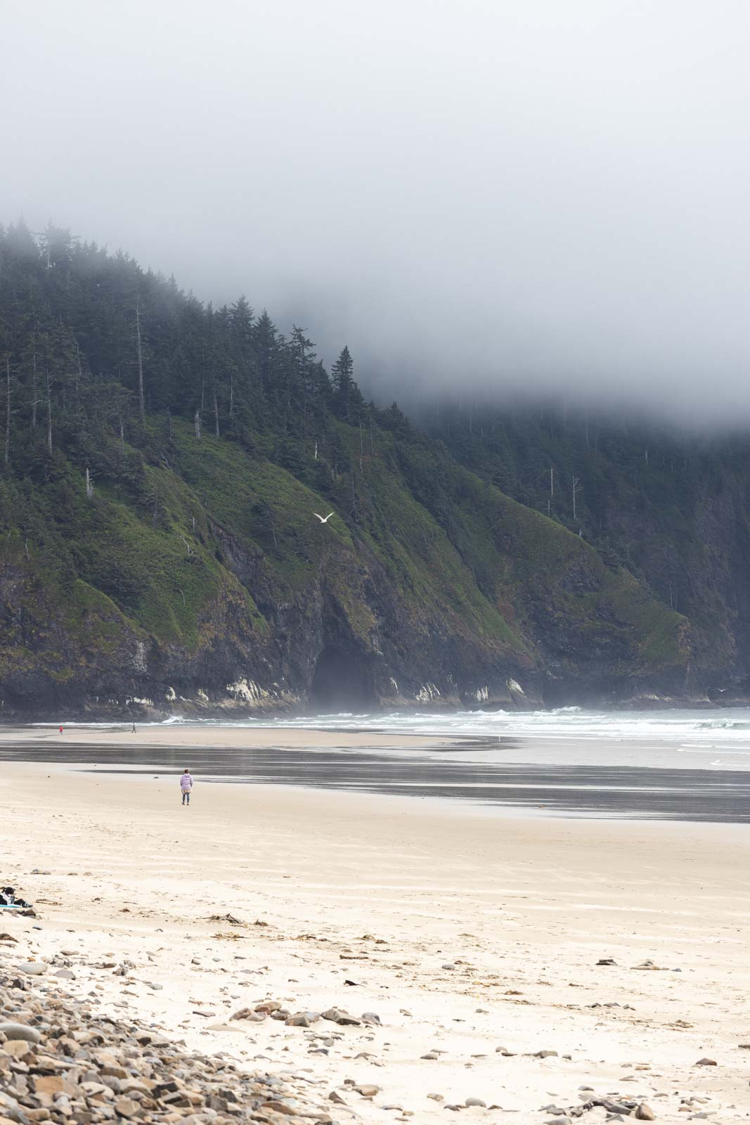 Beach and forested sea cliffs at Cape Lookout - one of the best Oregon Coast State Parks