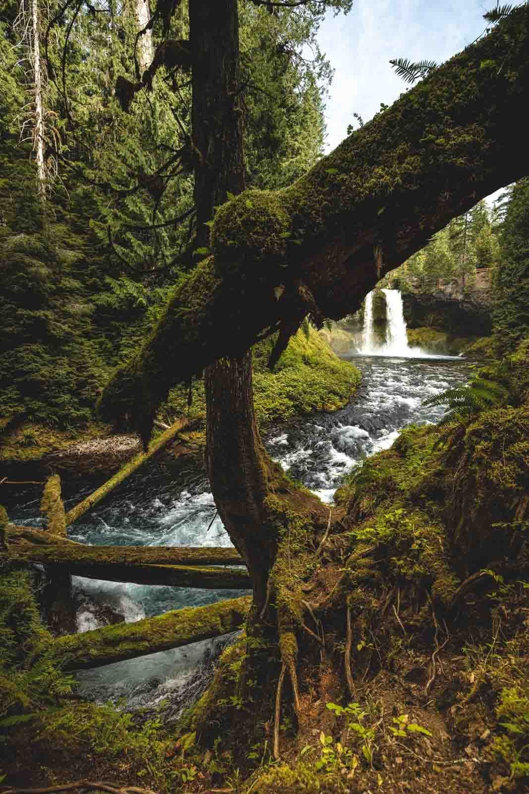 Waterfall on The McKenzie River Trail