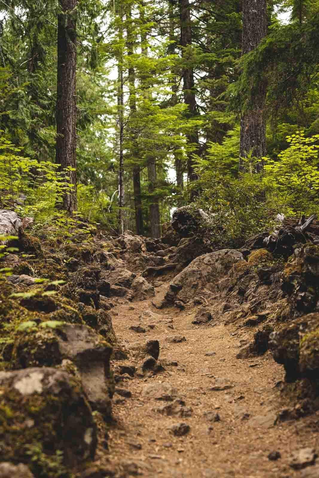 McKenzie River Trail through the woods