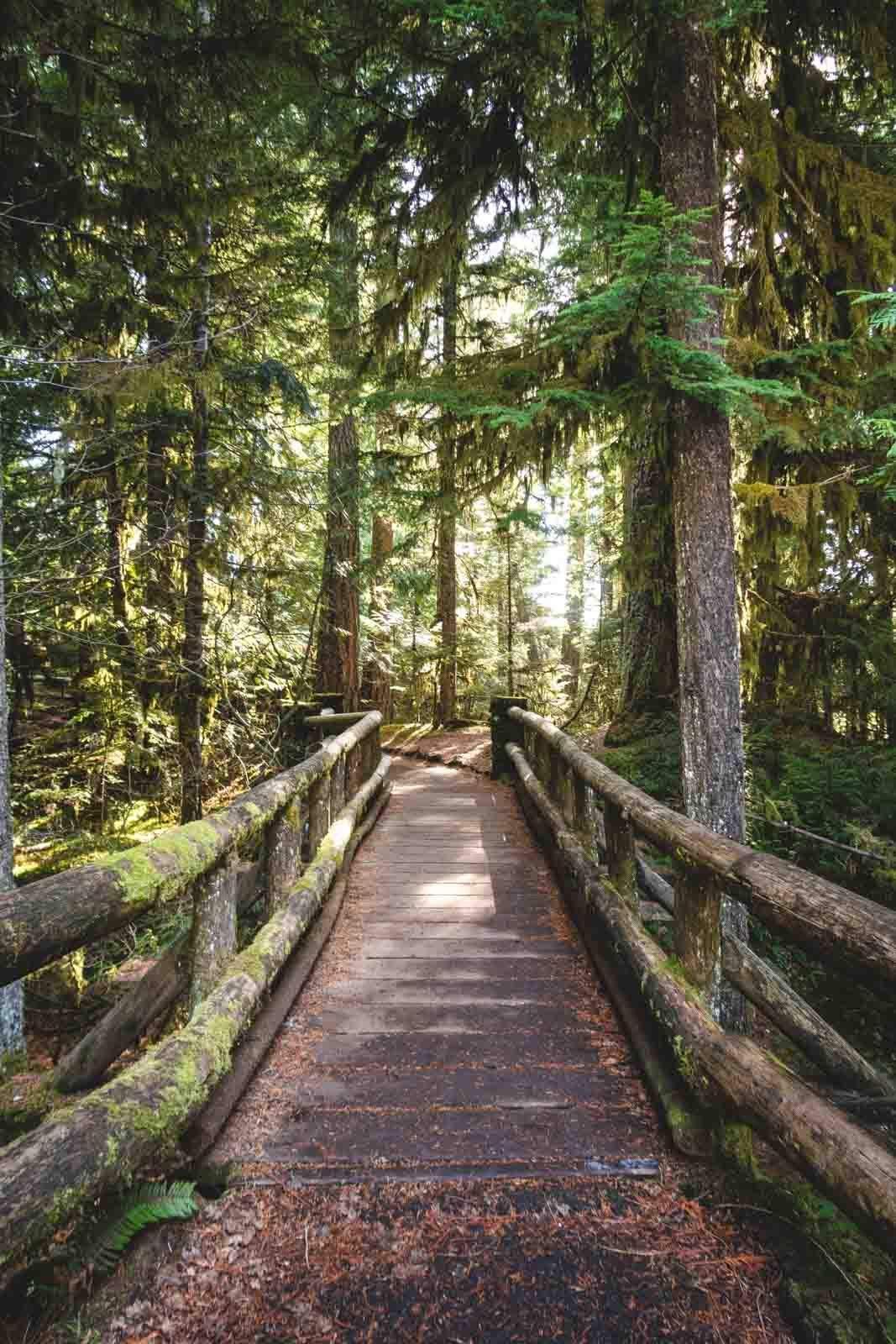 Wooden bridge on McKenzie River Trail