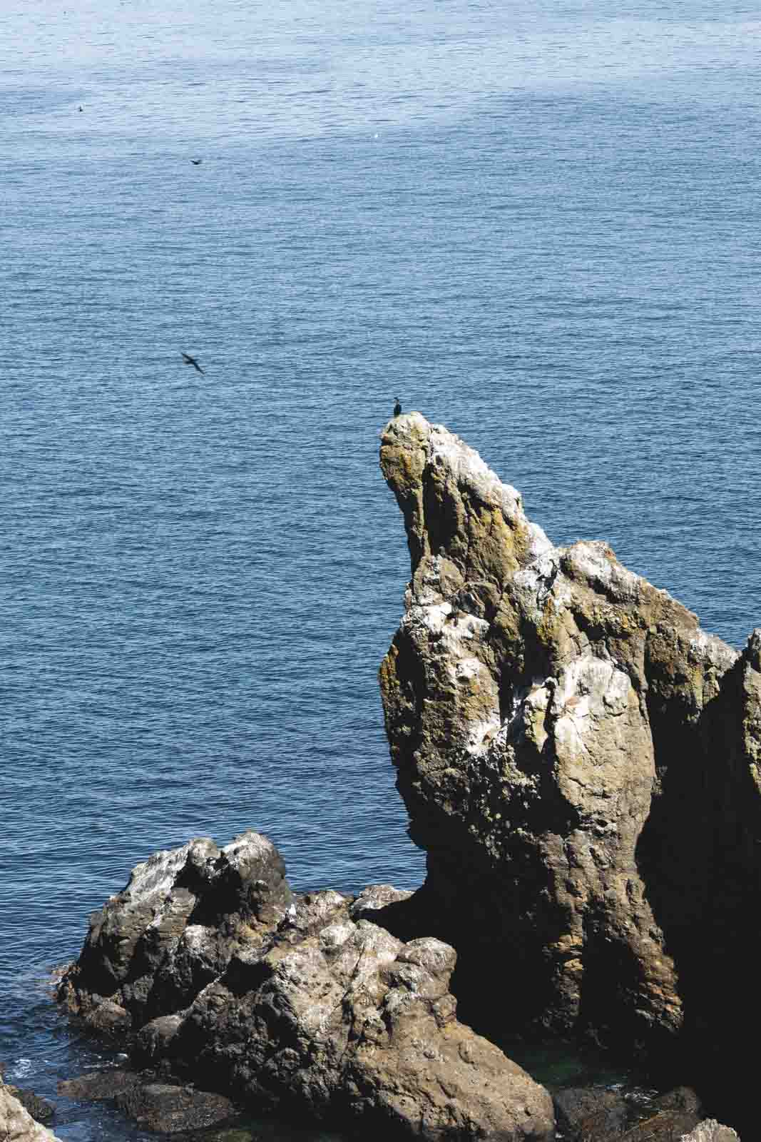 Seabirds on coastal rocks at Yaquina Head Lighthouse, one of the best Oregon Lighthouses