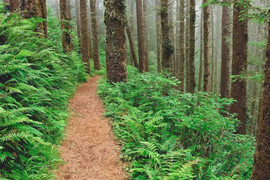Trail with ferns and trees on each side at Cape Lookout