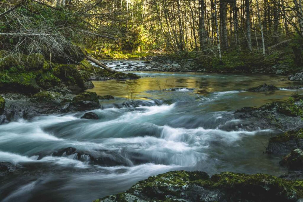 Small rapids in river surrounded by forest near Lincoln City