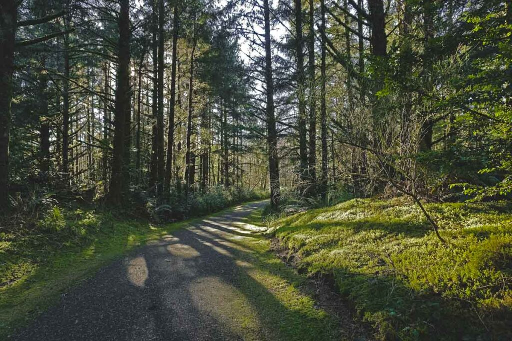 Paved hiking/biking trail with trees on each side at Fort Stevens State Park