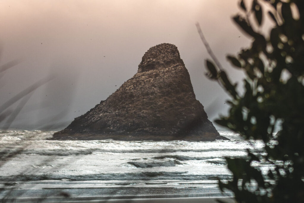 Triangle shaped rock jutting out of the ocean seen through trees and grasses in the foreground at Heceta Head