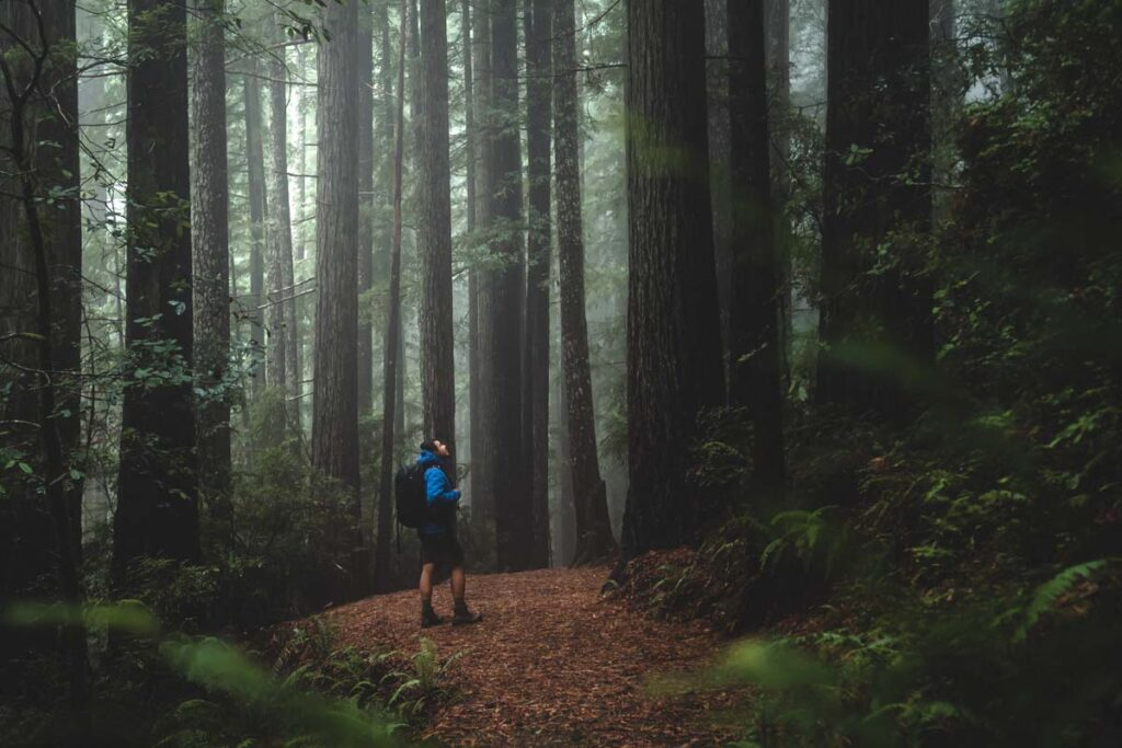 Hiker on dirt trail surrounded by redwood trees in Oregon near Gold Beach