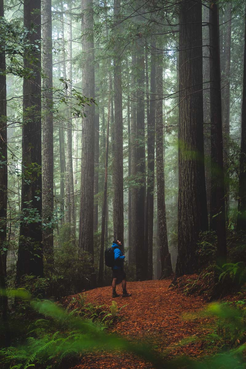 Person hiking on a trail surrounded by Oregon redwoods forest