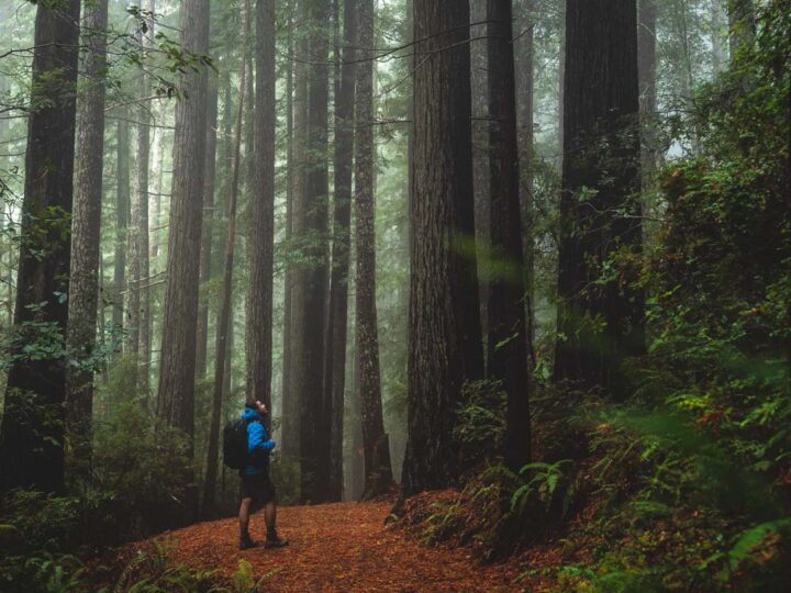 How to See The Redwoods in Oregon