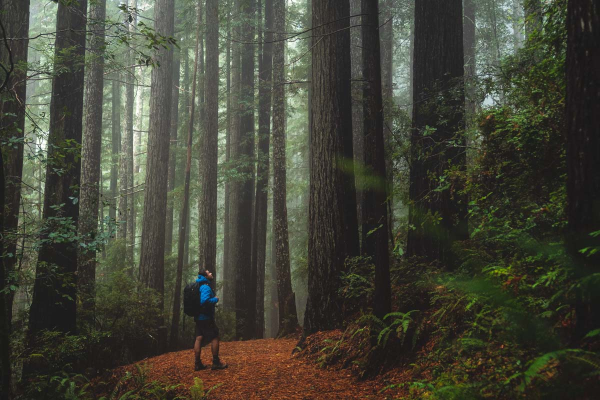 Redwoods in Oregon