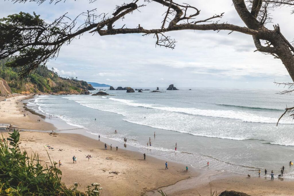 View of Indian Beach with people on the sand and in the water with rocky islands in the distance and tree branch framing the short - a top place to surf in Oregon