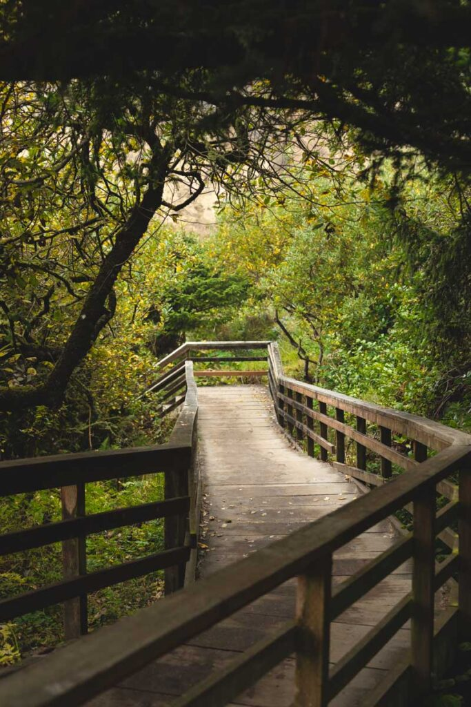 Treelined footbridge on the Ecola State Park to Indian Beach Trail